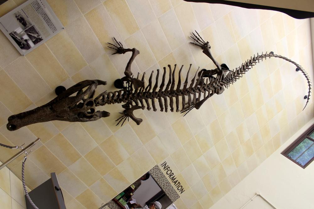 大阪ではマチカネワニは壁を這う生き物です。